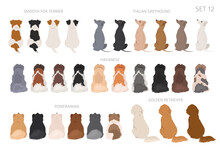 Sitting Dogs Backside Clipart, Rear View. Diifferent Coat Colors Variety. Pet Graphic Design For Dog Lovers