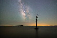 Silhouette Of A Tree At Assateague Island National Seashore Under The Milky Way Galaxy In Maryland