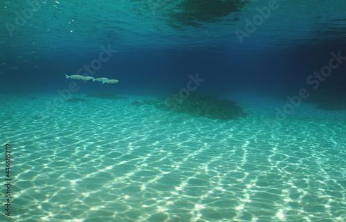 Canvas underwater , sea pool , carobbean sea , Venezuela