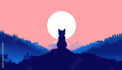 Valokuva Cat sitting alone in nature looking at full moon - Calm animal on hilltop contemplating and relaxing