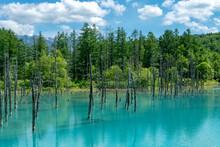 北海道 夏の青い池の風景