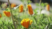 Beautiful Garden With Tulip Yellow Plants
