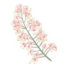 Blooming Chestnut Branch. Hand-drawn Vector Tree Flowers. Isolated Plant Illustration