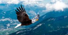 Adler Fliegt In Großer Höhe Mit Ausgebreiteten Flügeln An Einem Sonnigen Tag In Den Bergen.