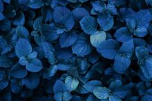Dark Blue Leaf Pattern Tropical Nature Background