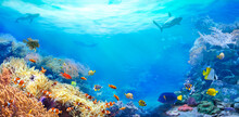 Animals Of The Underwater Sea World. Panoramic View Of The Coral Reef. Colorful Tropical Fish. Ecosystem.