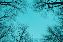 Black Bare Trees Silhouettes Are Over Bright Blue Sky