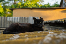 Black Cat Lies On The Roof