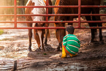 A Boy On The Ground Looking At Two Horses On A Virginia Horse Farm