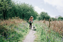 Young Girl Walking Her Dog Amongst The Bluebells In The UK Countryside