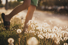 Child's Legs Walking Through Field Of Dandelion Flowers On Sunny Day.