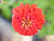 Colorado Orange Red Flower