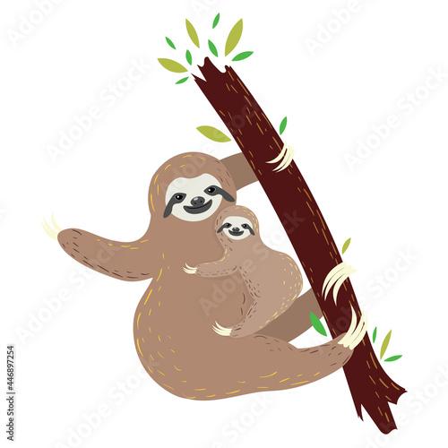 Fototapeta premium Sloth with baby