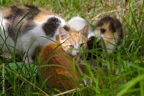 Obraz na plátně the motley cat family has its lunch