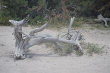 Uprooted Tree Stump Yellowstone
