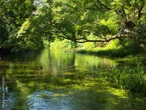 Obraz na plátne 越水した小浜池の瀬