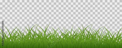 Fotografiet Green grass meadow border