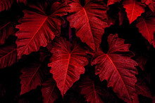 Closeup Nature View Of Red Leaves Background, Abstract Leaf Texture