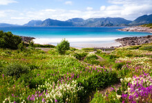 Hiking Trail Among A Picturesque Flowering Meadow Covered With Various Flowers. Sandy Beach By The Azure Bay Against The Backdrop Of Mountains And Field Of Wild Flowers.