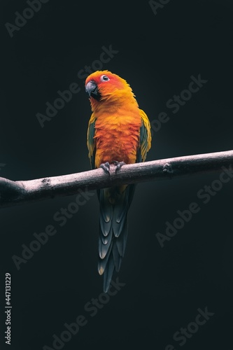 Fotografering parrot on a branch