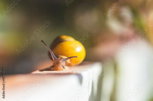 Garden snail in the own garden, close up Tapéta, Fotótapéta