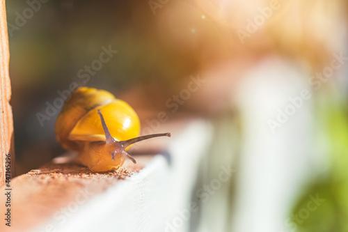 Fényképezés Garden snail in the own garden, close up