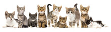 Group Of Kittens On A White Background