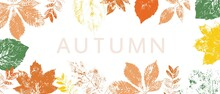 Frame With Colorful Autumn Leaves. Grunge Foliage Stamps. Place For Text, Banner Design.