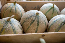 Sweet Ripe Cantalupe Melons From Carpentras Town For Sale On Farmers Market, Provence, France