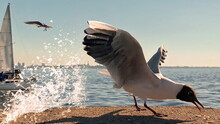 Seagull On Pier At Baltic Sea Water Splash And Yachting On Sea Background Blue Sky   Summer