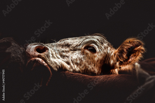 Rebanho de vacas Fototapeta