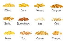 Cereal Crops, Agricultural Vector Illustration. Set Heap Grains Seeds, Farm Crop Harvest. Cereal Of Rice, Wheat, Corn, Rye, Barley, Millet, Buckwheat, Sorghum, Oat, Quinoa, Chickpea And Proso.