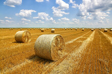 Crop Wheat Rolls Of Straw In A Field, After Wheat Harvested In Agriculture Farm, Landscape Rural Scene, Bread Production Concept, Beautiful Summer Sunny Day Clouds In The Sky