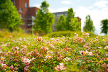 Close Up Of Urban Greening In The Context Of Climate Adaptation