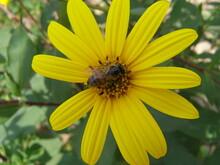 Beautiful Nature Northern Ukraine, Vegetation, Flowers, Fungi, Fields, Trees, Flora, Fauna