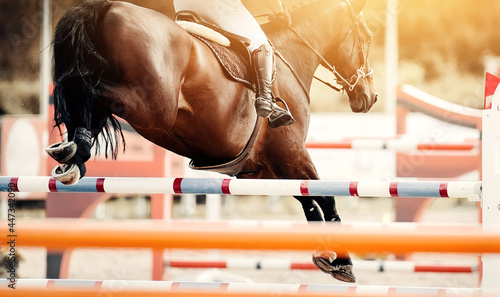 Canvas The bay horse overcomes an obstacle.Show jumping