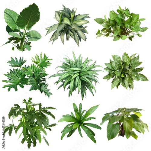Fotografia Set of plants isolated on white background