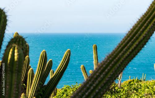 Obraz na plátně Cactos em frente ao mar no Parque Nacional de Jericoacoara, Ceará, Brasil