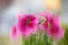 Beautiful Petunia Flowers Blurred Through Glass With Rain Drops.