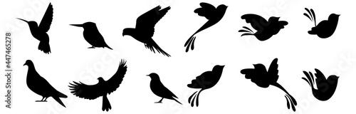 Fotografering Bird Silhouettes