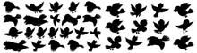 Bird Silhouettes, Bird Silhouettes, Vector Collection Of Bird Silhouettes