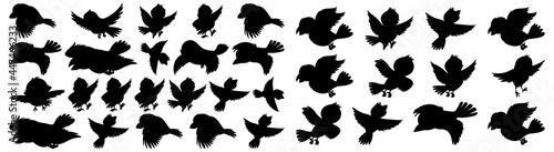 Billede på lærred Bird Silhouettes, Bird Silhouettes, Vector Collection of Bird Silhouettes