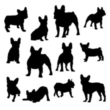 Collection Of French Bulldog Silhouette Vector Illustration Eps 10