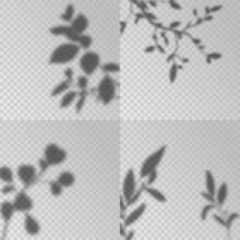 Overlay Shadows. Transparent Soft Light, Shadow Leaves And Plant Branches Natural Lightning, Decorative Design Elements Creative Mockup Vector Set