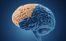 Frontal Lobe Is Important For Cognitive Functions And Control Of Voluntary Movement