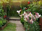 Fototapeta Kwiaty - kwiaty ogrodowe lilia