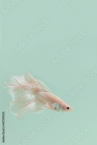Fototapeta premium close up of a fish