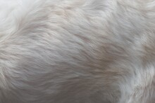Close Up Of A White Dog
