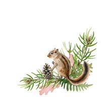 Chipmunk Animal On Pine Branch. Watercolor Hand Drawn Illustration. Funny Rodent With Fluffy Fur Forest Decor Element. Funny Wild Chipmunk With Pine Branch And Cone Decoration. White Background