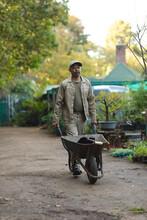 African American Male Gardener Using Wheelbarrow At Garden Centre